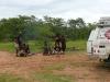 africa222